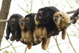 Affen_Wochenende