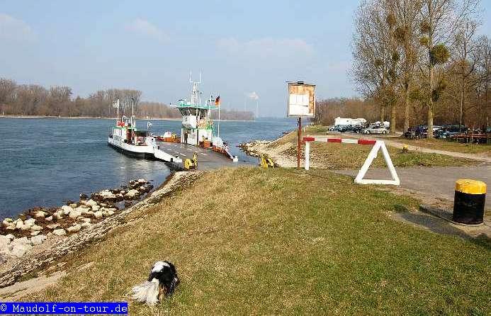 2014_03_06 Neuburgweier Rhein 05
