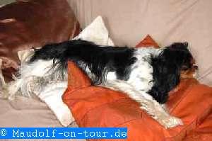 2014_03_10 Hirschhorn 01