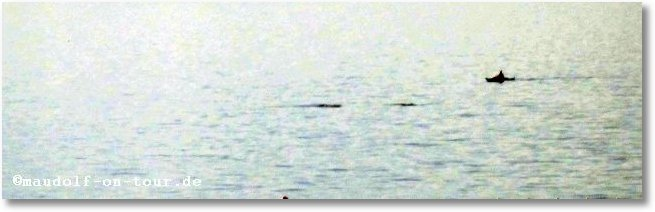 2014 09 20 Kovacine Delfine 01-1