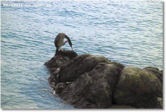 2014 09 21 Kovacine 12 Fahrradtour entlang dem Meer Vogel