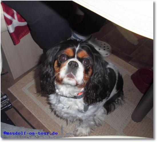 2015-04-06 Lissy bettelt