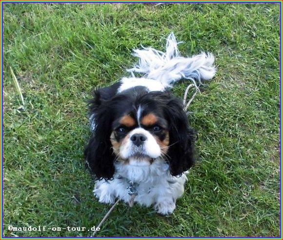 2015-05-09 Lissy