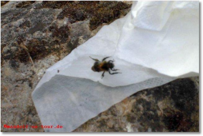 2015-06-28 Biene gerettet