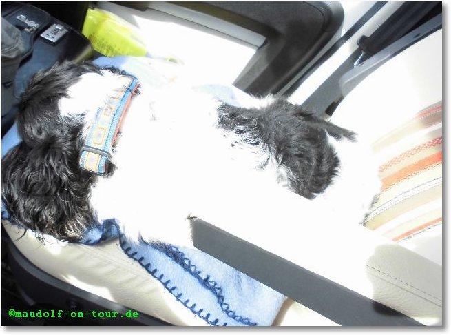 2015-10-05 Lissy Beifahrerin 2