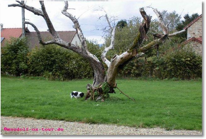 2015-10-06 Lissy bei toten Baum