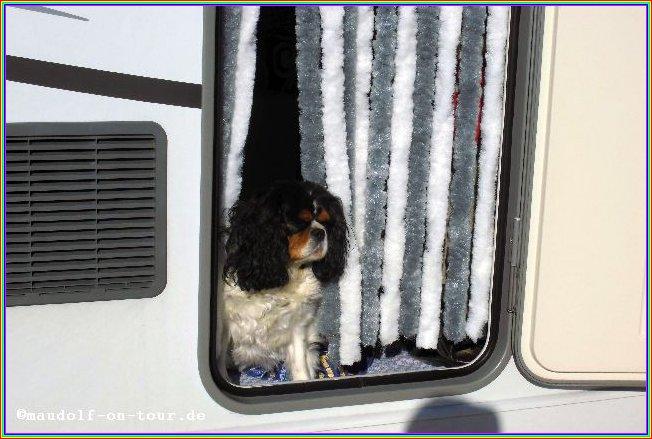 2015-10-22 Lissy bewacht Maudolf