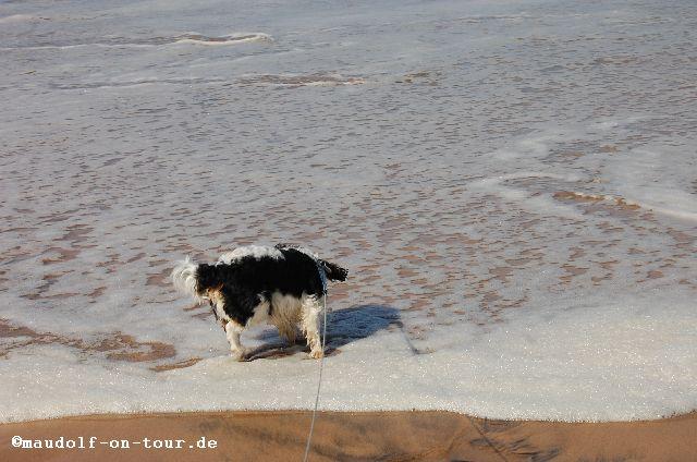2015-10-28 Praia da Cordoama Lissy 05