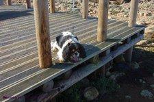 2015-11-06 Lissy Wanderung Steilküste 01