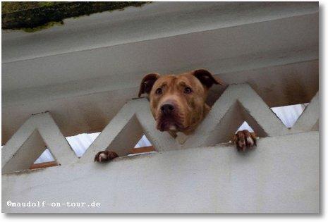 2016-01-22 Hundesalon 1