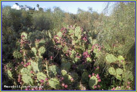 2016-02-11 Kaktus Spaziergang Manta Rota