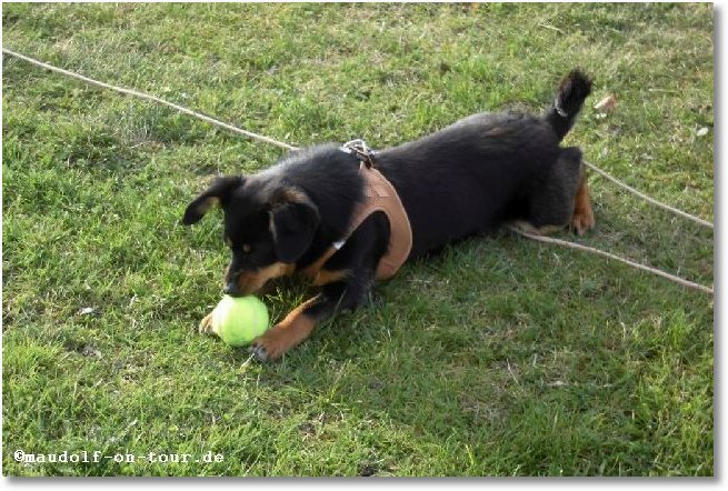 2016-04-07 Spaziergang Kelly 2