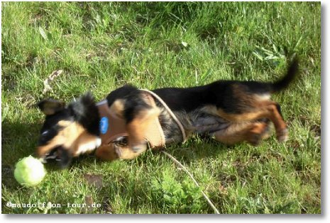 2016-04-07 Spaziergang Kelly 3
