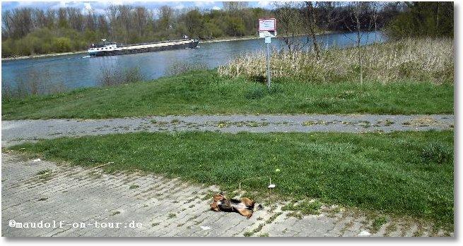 2016-04-08 Kelly am Rhein 1