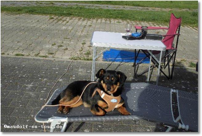 2016-04-08 Kelly am Rhein 2