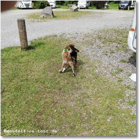 2016-08-10 Kelly spielt Hund