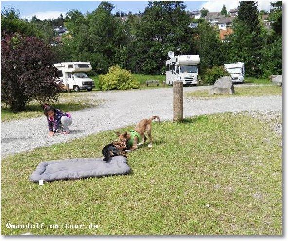 2016-08-10 Kelly spielt Kind Hund