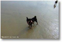 2016-10-18 Praia do Osso da Baleia Kelly Salzwasser 2