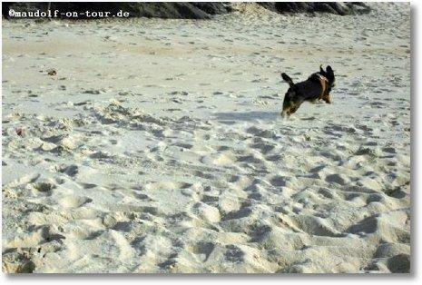 2016-10-20 Strand nahe M Kelly 2