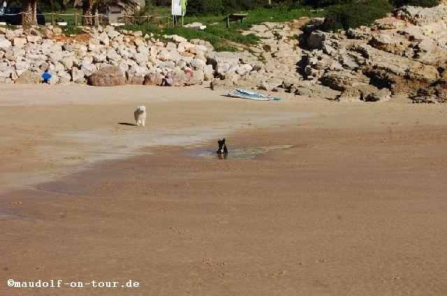 2017-01-16 Praia da Ingrina Kelly 1
