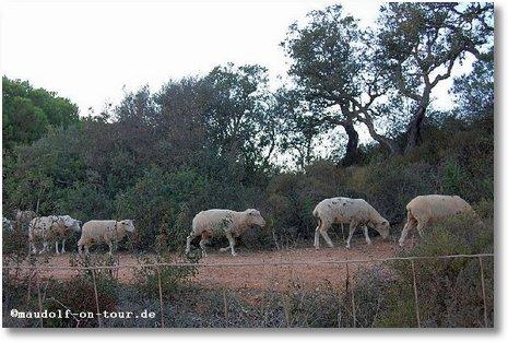 2017-11-12 Schafe 1
