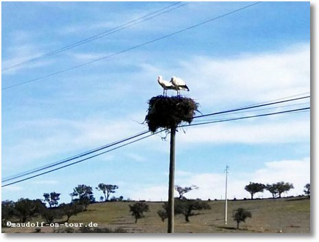 2018-02-12 Storch im Nest 1