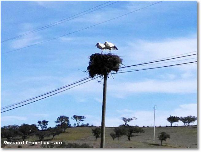 2018-02-12 Storch im Nest 2