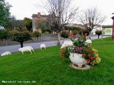 2017-10-16 Schafe Mezieres-sur-Issoire 1