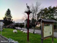 2017-10-16 Schafe Mezieres-sur-Issoire 2