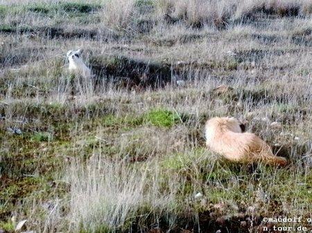2018-11-28 am See Hundebelagerung