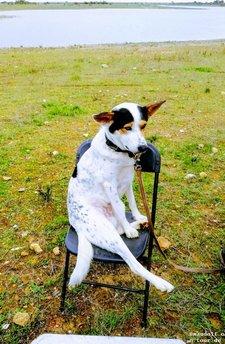 2018-11-29 Marga+Willy's Hund Stuhl
