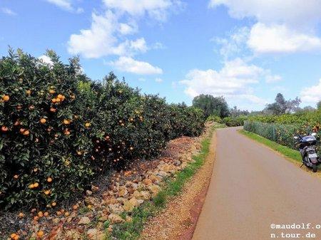 2019-02-02 Orangenplantage 2