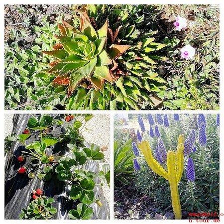 2019-04-04 PflanzenCOLLAGE