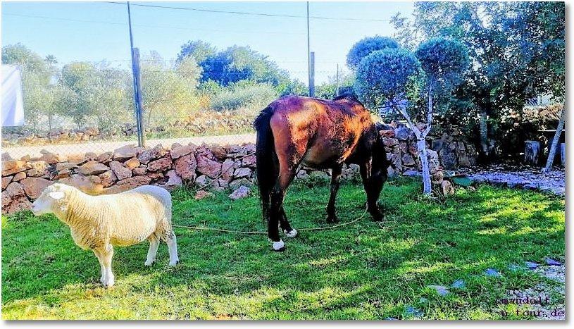 2019-11-16 Pferde Schaf Rancho