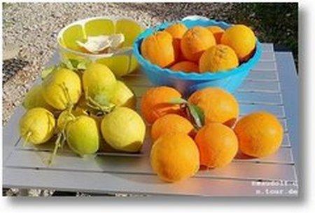 2019-12-03 Orangen Zitronen 1