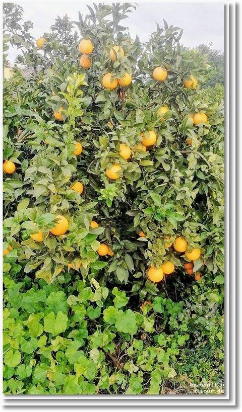 2020-01-03 Orangen