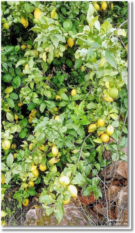 2020-01-03 Zitronen 2
